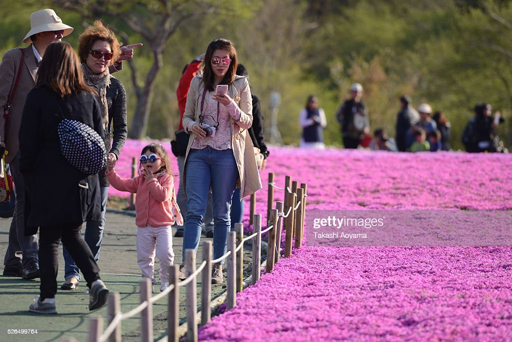 Visitors take photographs of Shibazakura (Moss phlox) during the Fuji Shibazakura Festival at Ryujin-ike Pond on April 30, 2016 in Fujikawaguchiko, Japan. About 800,000 mos phlox flowers are in full bloom at the festival held near the Mt. Fuji.