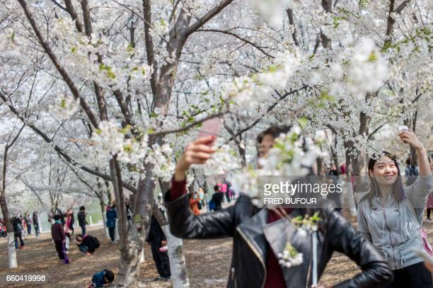 TOPSHOT Visitors take pictures of the cherry blossoms at the Yuyuan Tan Park in Beijing on March 30 2017 Thousands of Beijingers flock to the park...