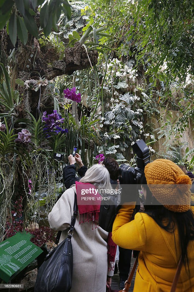 Visitors take pictures, on February 21, 2013, at flowers of the 'Mille et une orchidees' (1,001 orchids) exhibition organized at the Jardin des Plantes in Paris from February 22 to March 23, 2013. All these orchids are part of the Jardin du Luxembourg collection.