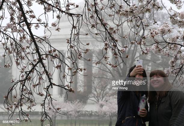 Visitors take selfies as cherry trees around Tidal Basin are in peak bloom March 27 2017 in Washington DC The blossoms survived after a late winter...