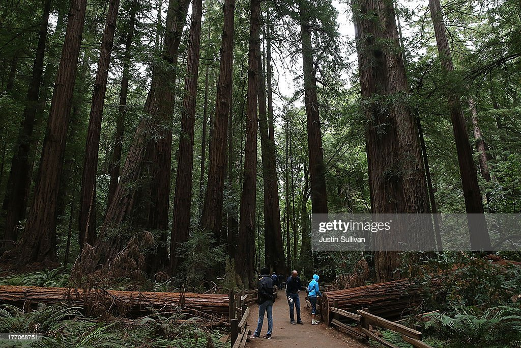 Visitors walk along a path of Coastal Redwood trees at Muir Woods National Monument on August 20, 2013 in Mill Valley, California. A four-year study by the Save the Redwoods League called 'the Redwoods and Climate Change Initiative' found that due to changing environmental conditions, California's Coast Redwoods and Giant Sequoias are experiencing an unprecedented growth surge and have produced more wood over the past century than any other time in their lives.