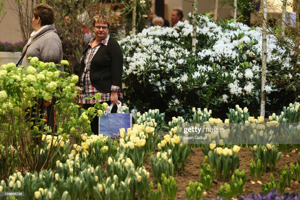 Visitors walk among flowers on display at the Holland stand at the 2013 Gruene Woche agricultural trade fair on January 18, 2013 in Berlin, Germany. The Gruene Woche, which is the world's largest agricultural trade fair, runs from January 18-27, and this year's partner country is Holland. According to a recent study the average German consumes 1094 animals in his or her lifetime, including four cows, four sheep, 12 geese, 37 ducks, 46 turkeys, 46 pigs and 945 chickens.