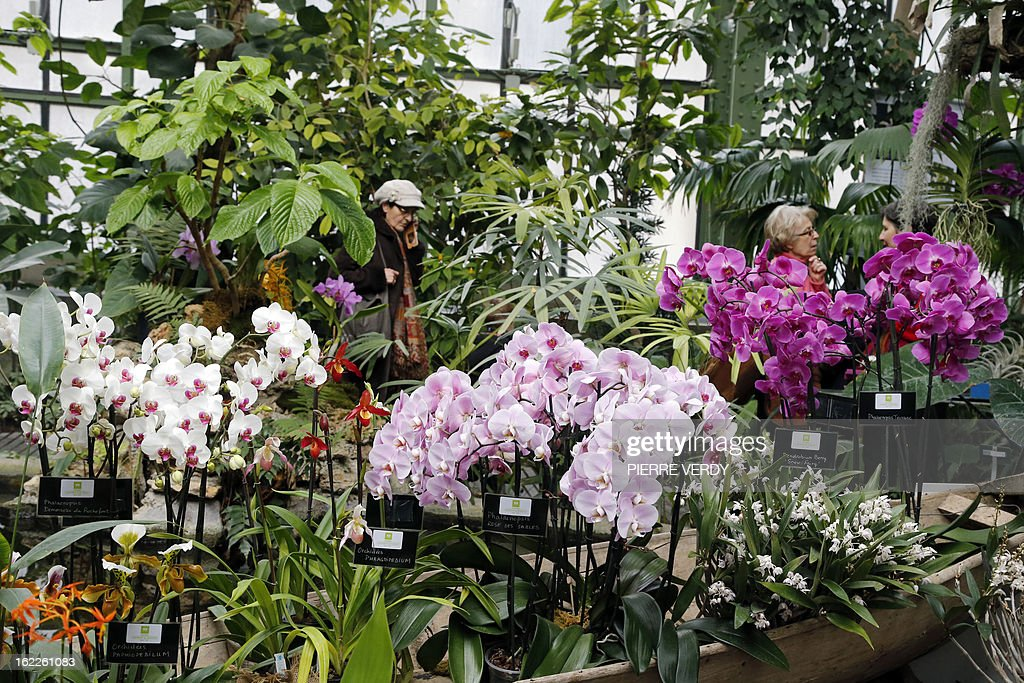 Visitors walk, on February 21, 2013, through flowers of the 'Mille et une orchidees' (1,001 orchids) exhibition organized at the Jardin des Plantes in Paris from February 22 to March 23, 2013. All these orchids are part of the Jardin du Luxembourg collection.
