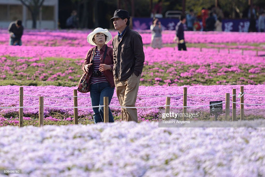 Visitors walk past Shibazakura (Moss phlox) during the Fuji Shibazakura Festival at Ryujin-ike Pond on April 30, 2016 in Fujikawaguchiko, Japan. About 800,000 mos phlox flowers are in full bloom at the festival held near the Mt. Fuji.