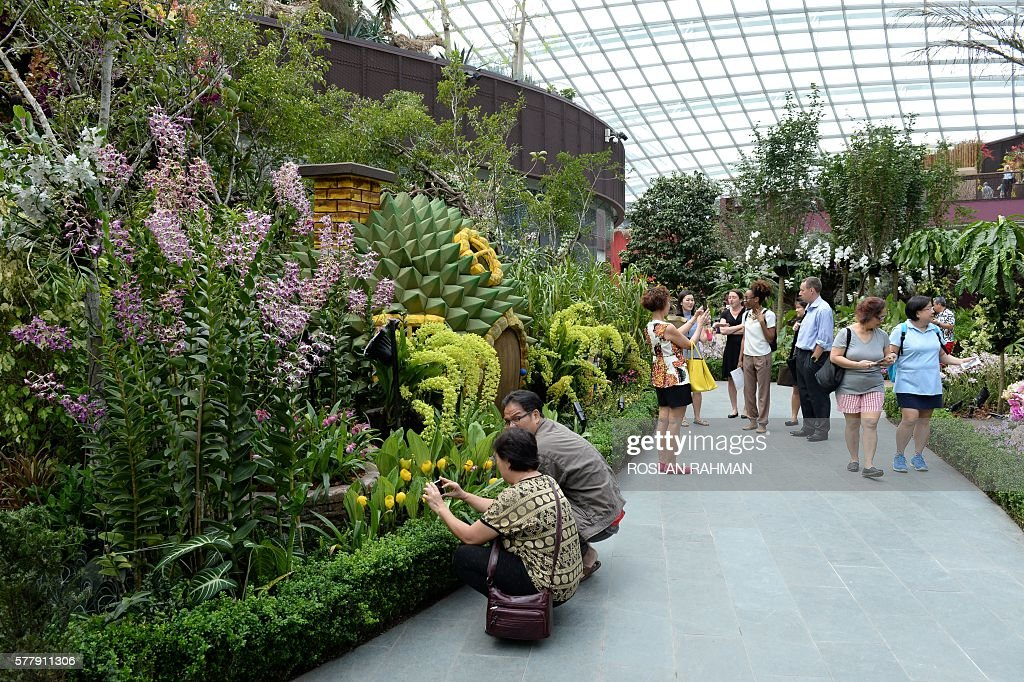 visitors walk through the orchid extravaganza at gardens by the bay as part of the singapore garden festival on july 20 2016 over 10000 orchid plants