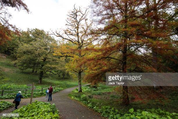 Visitors walk through Wakehurst 30 years after The Great Storm devastated much of the botanic garden's landscape on October 14 2017 in Haywards Heath...