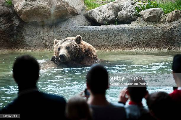 Visitors watch a brown bear as he waits for lunch at the Bioparco zoological garden on April 5 2012 in Rome Italy