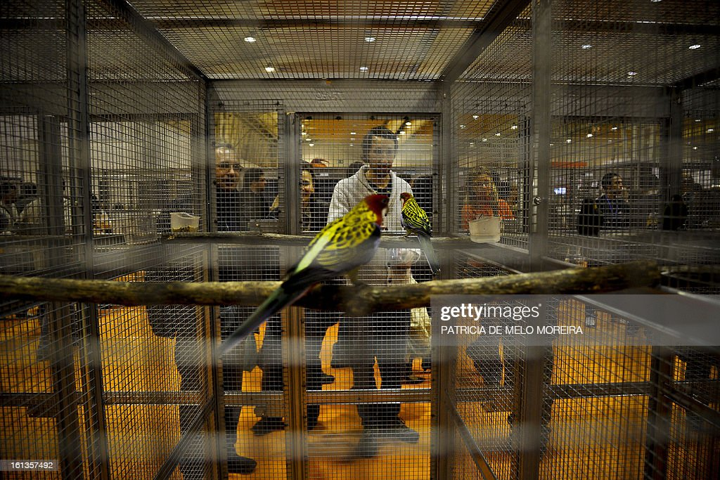 Visitors watch a parrot in his cage during a pet festival in Lisbon on February 9, 2013.