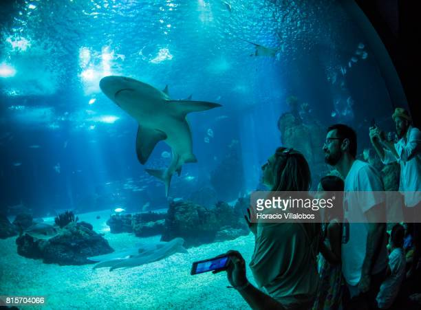 Visitors watch and photograph a shark part of the permanent exhibit of 'One Planet One Ocean' at the Oceanario de Lisboa on July 16 2017 in Lisbon...