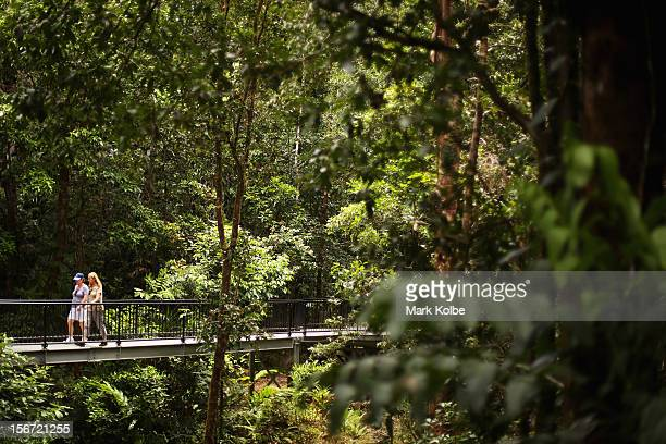 Vistors walk across and elevated boardwalk through the world heritage listed daintree rainforest on November 13 2012 in Mossman Gorge Australia...