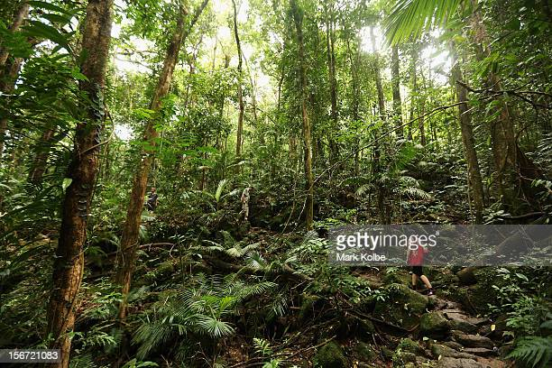 Vistors walk through the world heritage listed daintree rainforest on November 14 2012 in Mossman Gorge Australia Located in Far North Queensland the...