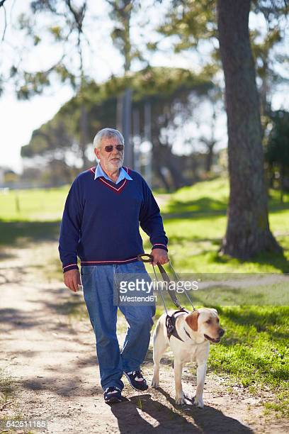 Visually impaired man walking with his guide dog in a park