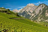 Viticulture terraces, Premploz, Conthey, Canton of Valais, Switzerland