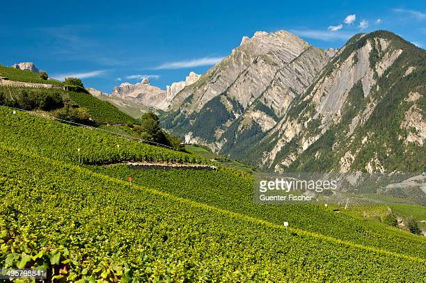 Viticulture terraces, Premploz, Conthey, Canton of Valais, Switzerland