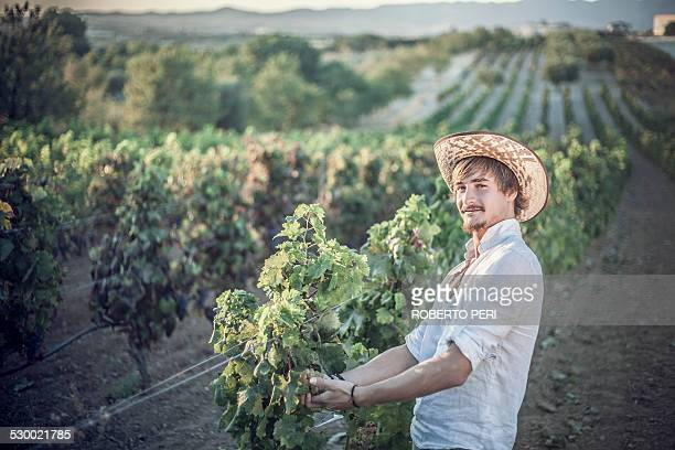 Viticulturist working in vineyard, Cagliari, Sardinia, Italy