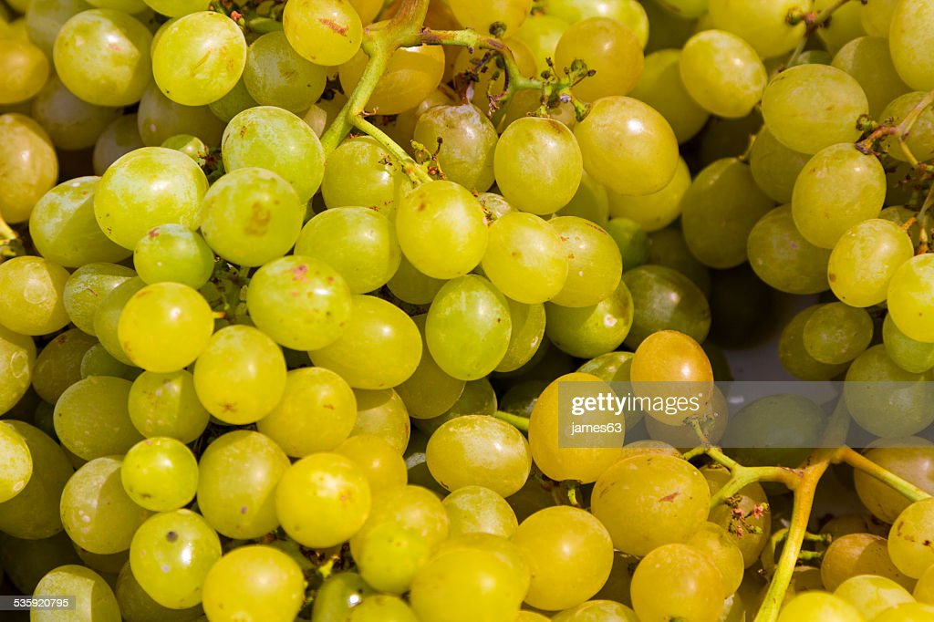 vitis background with bunches of sweet grapes : Stock Photo