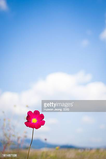 Vivid flower and sky