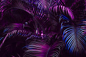 Vivid purple palm leaves pattern.  Blue gradient colored filter. Creative layout, toned, horizontal