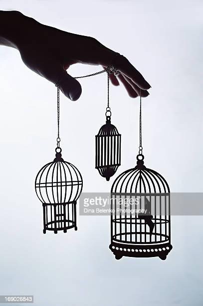 Vogelfreund