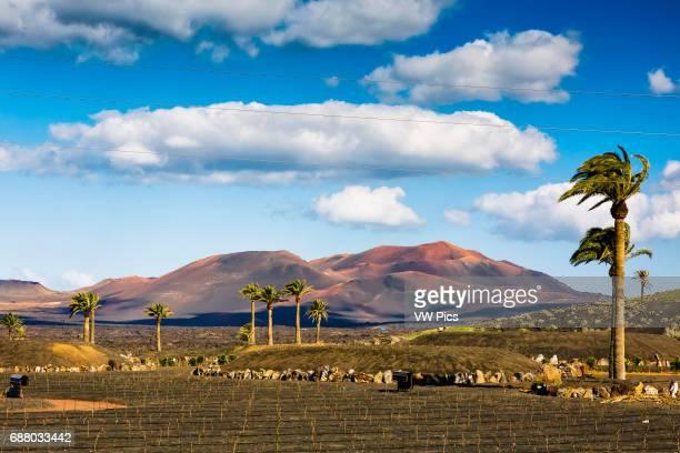 Volcanic landscape Lanzarote Las Palmas Canary Islands Spain Europe