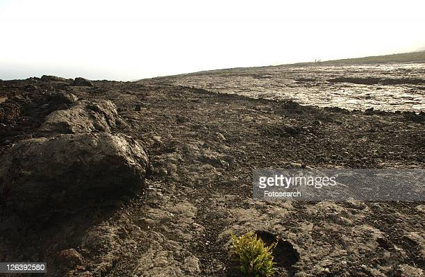 Volcano National Park - Big Island of Hawaii - hardened lava