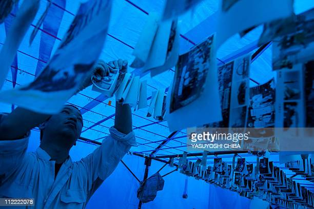 A volunteer dries photographs unearthed from the tsunami devastation in Kesennuma city Miyagi prefecture on April 14 2011 Japan's seismologists were...