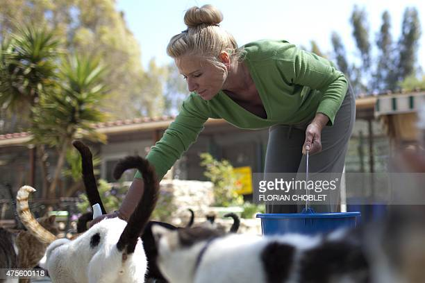 A volunteer feeds cats at the Malcom Cat Protection Society shelter on April 22 2015 in the Sovereign Base Area of Akrotiri a British overseas...