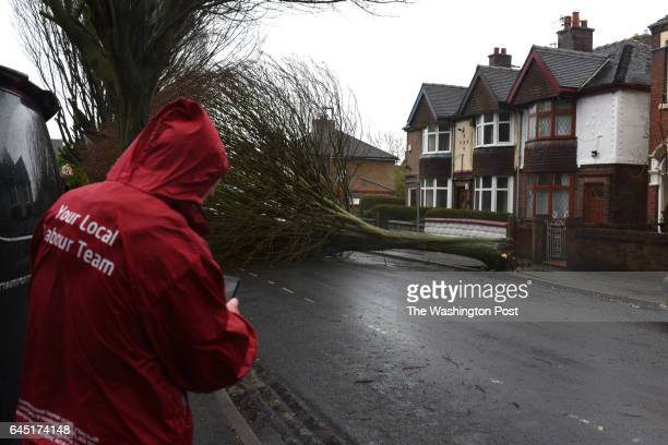 A volunteer for the Labour party walks past a fallen tree in Stoke on Trent United Kingdom on February 23 2016 Turnout was very low a result of...