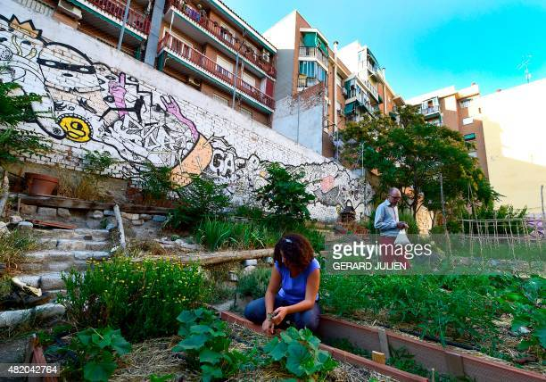 CUENCA Volunteer gardeners weed planter boxes in the urban and community garden 'Esta es una Plaza' in Madrid on June 17 2015 'For me and for many...