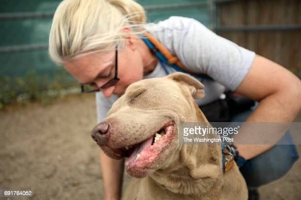 Volunteer Kim Kirkland plays with dog 'Mr Salt' at the Best Friends Animal Society shelter on Thursday April 27 2017 in Mission Hills CA Among the...