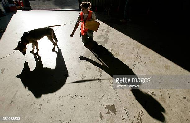Volunteer Lisa Huff offers a treat to an emaciated but friendly German Shepard at a hangar at the Van Nuys Airport where dozens of pets were...