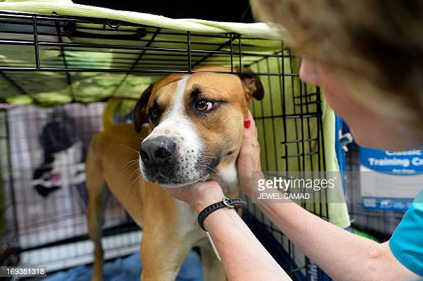 Volunteer Paula McCoart feeds a dog at an animal shelter for tornadodisplaced pets on May 23 2013 in Moore Oklahoma Monday's tornado in this Oklahoma...