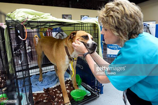 Volunteer Paula McCoart pets a dog at an animal shelter for tornado displaced pets on May 23 2013 in Moore Oklahoma Monday's tornado in this Oklahoma...