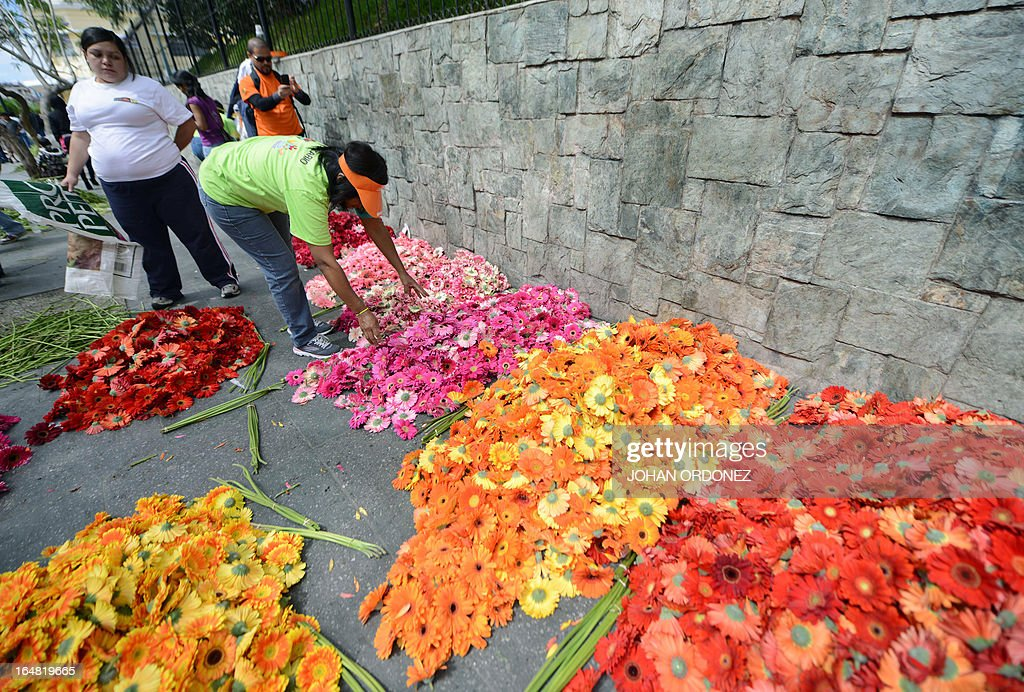 A volunteer picks up flowers during the making of a 1,400 meters carpet of flowers and colored sawdust, made by municipal employees and volunteers in an attempt to set a Guinness World Record for the longest carpet of the world, in Guatemala City on March 28, 2013. These carpets are traditionally made during Hoy Week each year. AFP PHOTO / Johan ORDONEZ