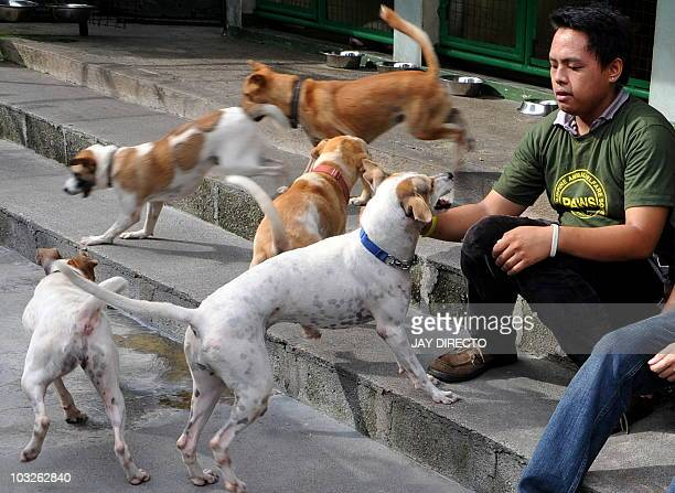 A volunteer plays with dogs rescued from abusive owners at the Philippine Animal Welfare Society in Manila on August 6 2010 PAWS was among local...