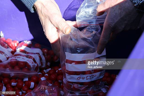 Volunteers empty thousands of Jaffa candies before their race down Baldwin Street on July 17 2015 in Dunedin New Zealand The residential street is...
