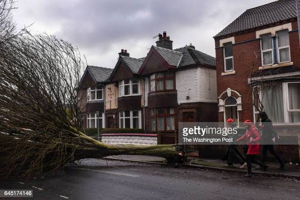 Volunteers for the Labour party walks past a fallen tree in Stoke on Trent United Kingdom on February 23 2016 Turnout was very low a result of...