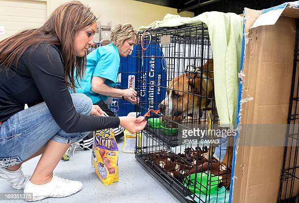 Volunteers Paula McCoart and Tiffany Pacheco feed dogs at an animal shelter for tornadodisplaced pets on May 23 2013 in Moore Oklahoma Monday's...