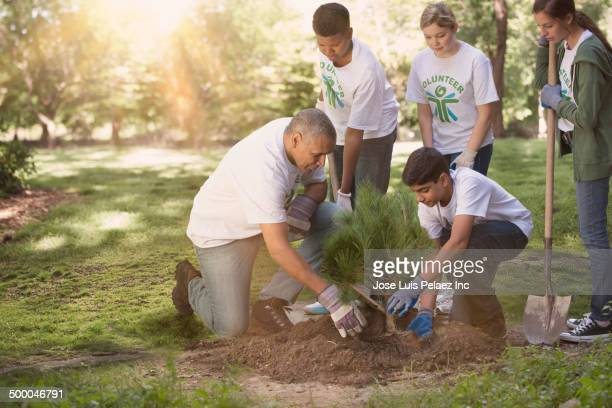 Volunteers planting tree in urban park