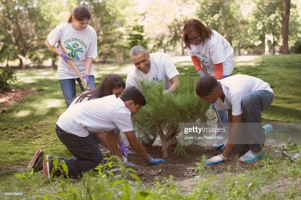 Volunteers planting tree in urban park