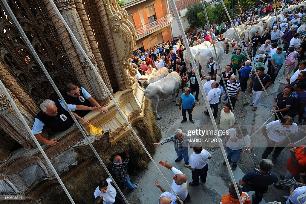 Volunteers prepare the procession of the oxen to carry a 25 meters wheat obelisk build in honor of Madonna Addolorata (Our Lady Of Sorrows) during a farmer festival in Mirabella Eclano, south of Italy on September 14, 2013. The ancient farmer festival (Medium Eve) after 900 years of stop, restart in XVI age to protect the hard work of farmers like religious festival in honour of the Lady Of Sorrows. 12 Oxen carry the obelisk and all the Mirabella Eclano citizens pull the ropes to balance the obelisk during the slow run.