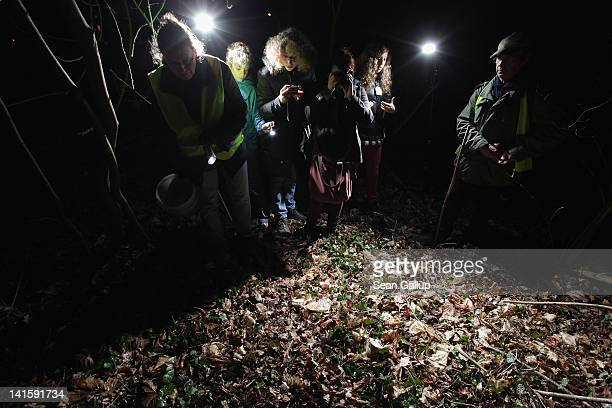 Volunteers prepare to release toads they collected along an amphibian fence at a road near Berlin on March 18 2012 in Gueterfelde Germany Volunteers...