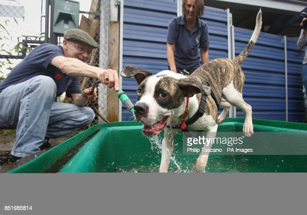 Volunteers Tony Collier and Katie Morgan playing at the water bath with Didi an American Bulldog in the sensory garden at Battersea Dogs and Cats...