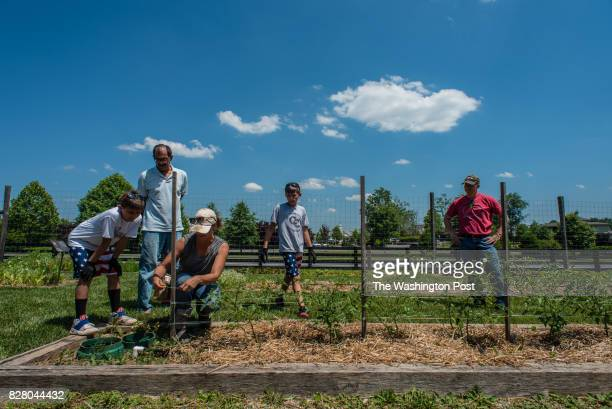 Volunteers watch as Deb Dramby the Market Manager and Education Coordinator demonstrates how to set up a tomato trestle From left are Avery Lyons...