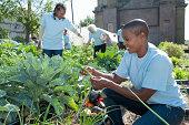 Volunteers Working in Urban Community Garden