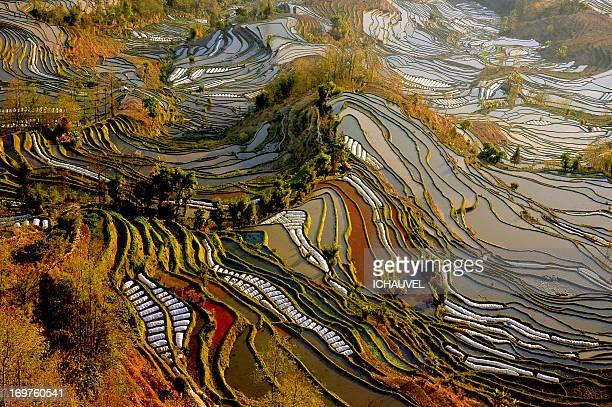 Vue sur les riziéres du yunnan