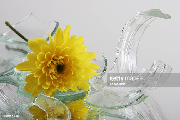 vulnerable,  glass with flower