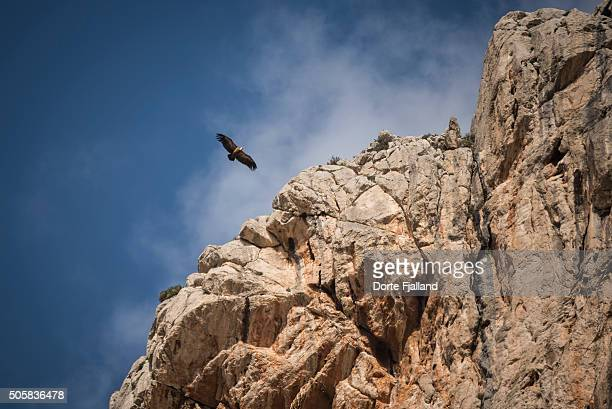 Vulture flying along some rocks
