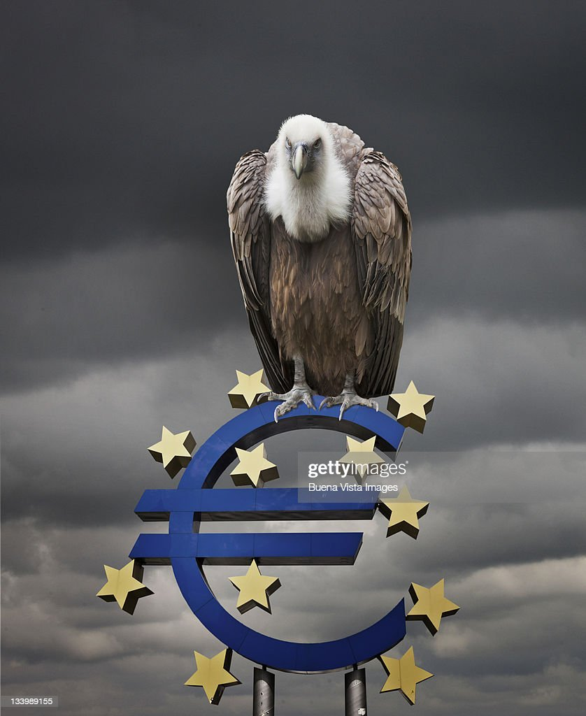 Vulture perched over Euro symbol : Stock Photo