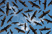 Vultures in Random Pattern